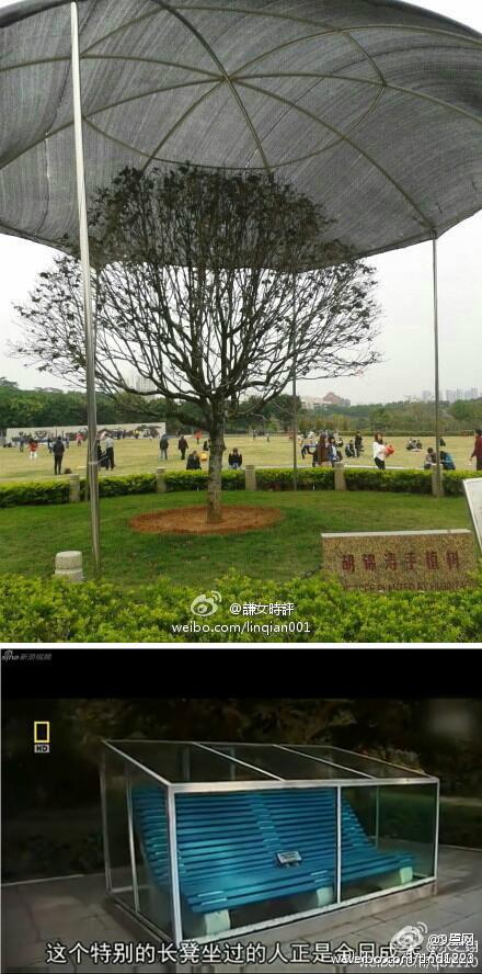 胡锦涛亲手植树