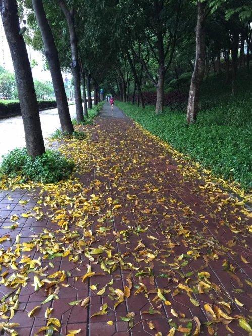 深圳的落叶-1