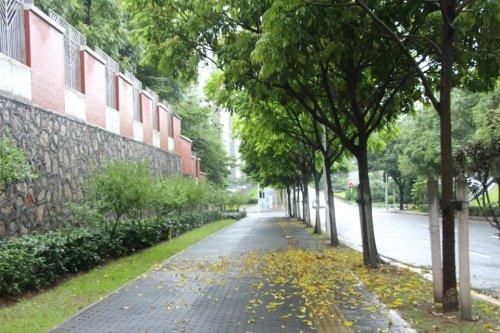 深圳的落叶-2