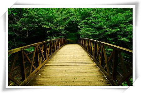 第一页-桥