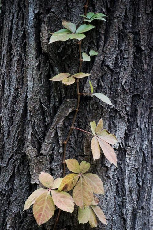 第三页-树-叶