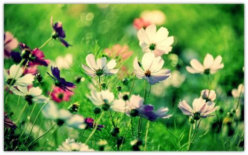 第三页-野花